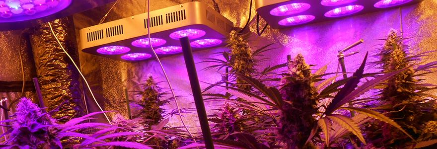 lampes horticoles
